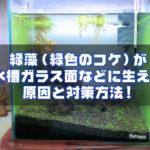 緑藻(緑色のコケ)が水槽ガラス面などに生える原因と対策方法!