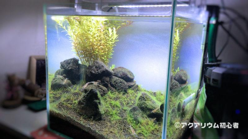 緑藻が水槽内に生える原因