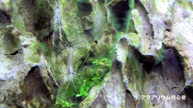 緑藻が生えた場合の対処方法