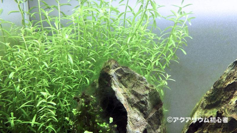 緑藻が生えにくくする対策方法
