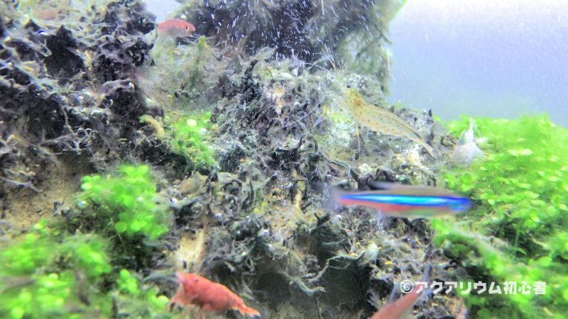 藍藻(シアノバクテリア)への対策・駆除方法