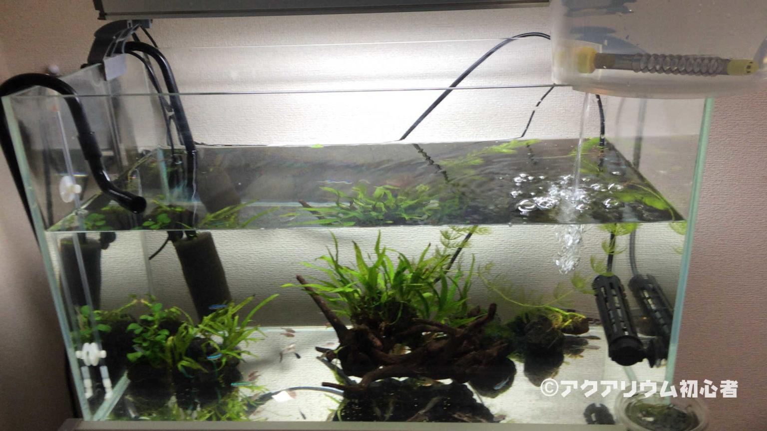 ガラス水槽60cm規格